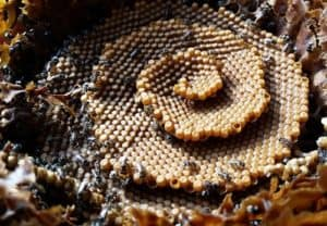 native-beehive-2a