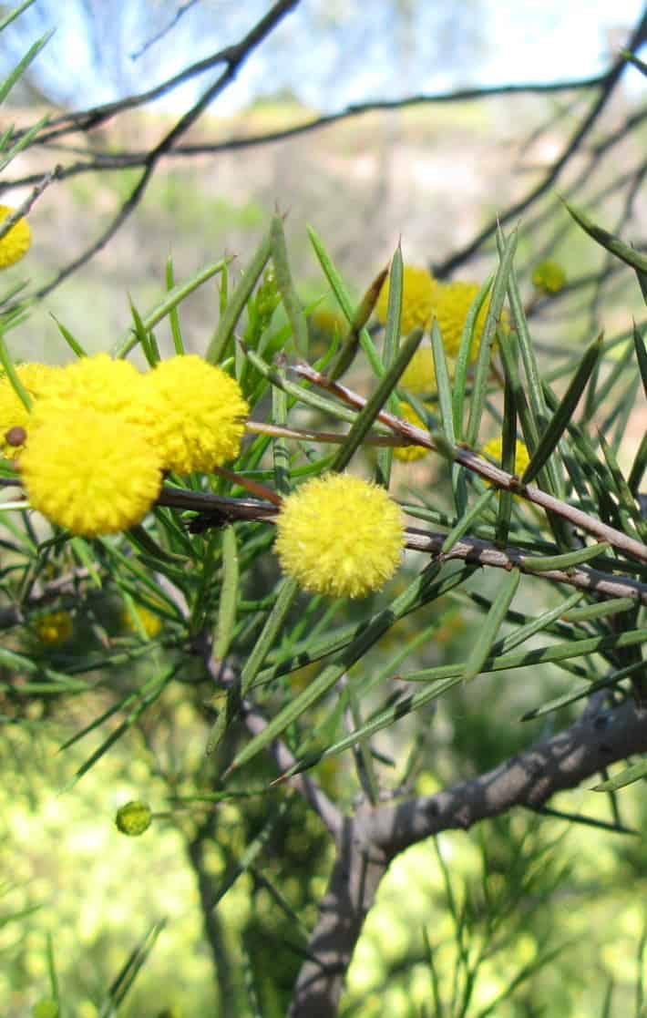 Clearing Native Plants in Qld: New Framework means 'Proceed with Caution'