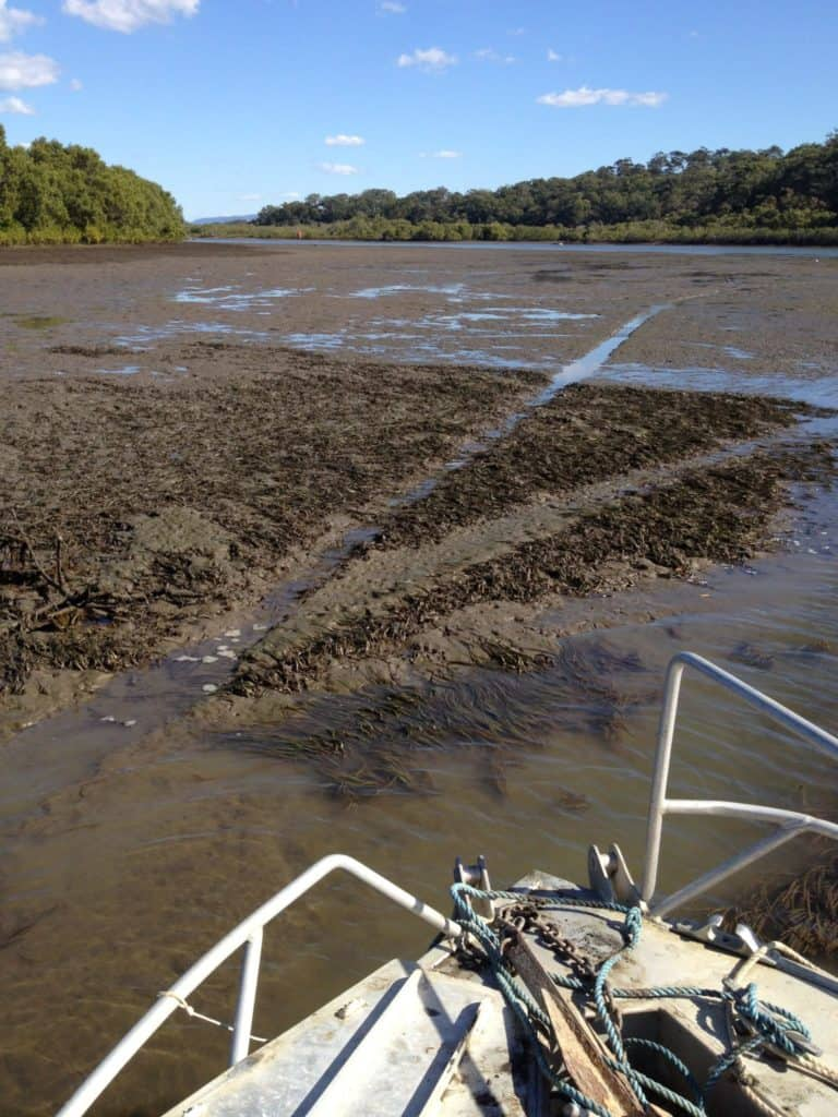Exposed seagrass beds showing damage from boats ('prop scars') in the Coomera River