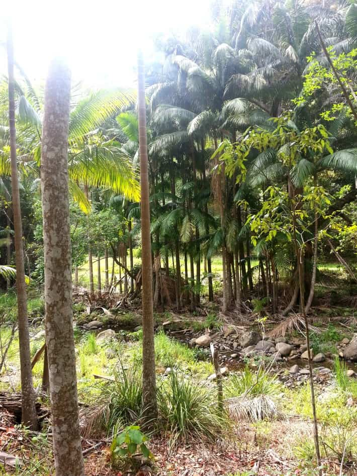 Gold Coast Hidden Gem: The Guanaba Indigenous Protected Area