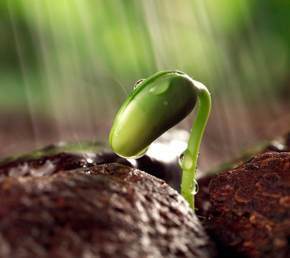 Growing in the Rain