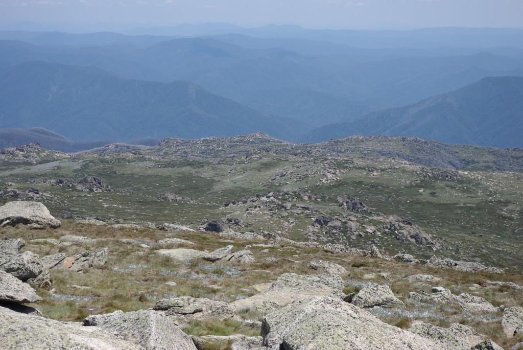 Alpine Herbfields at Mount Kosciuszko, New South Wales