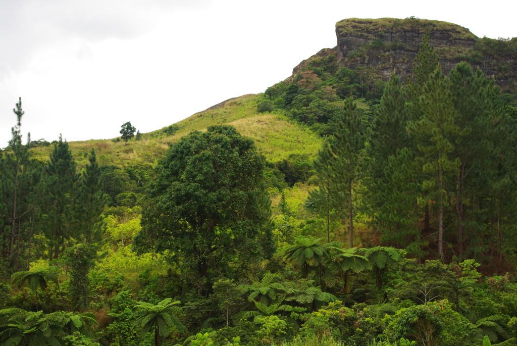 Basaltic Rainforest in Koroyanitu National Park, Fiji