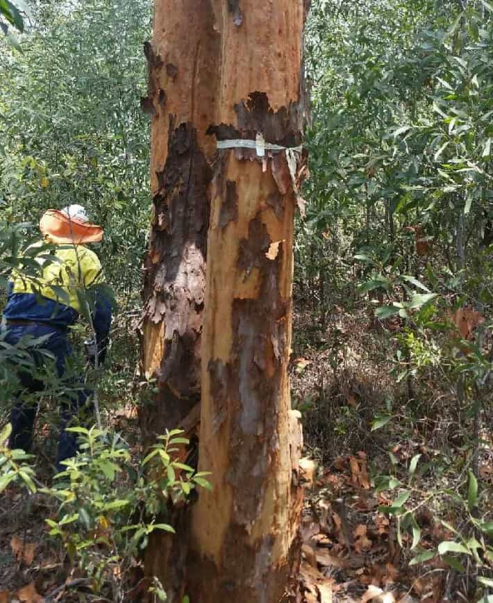Changes to Queensland's Vegetation Management Act