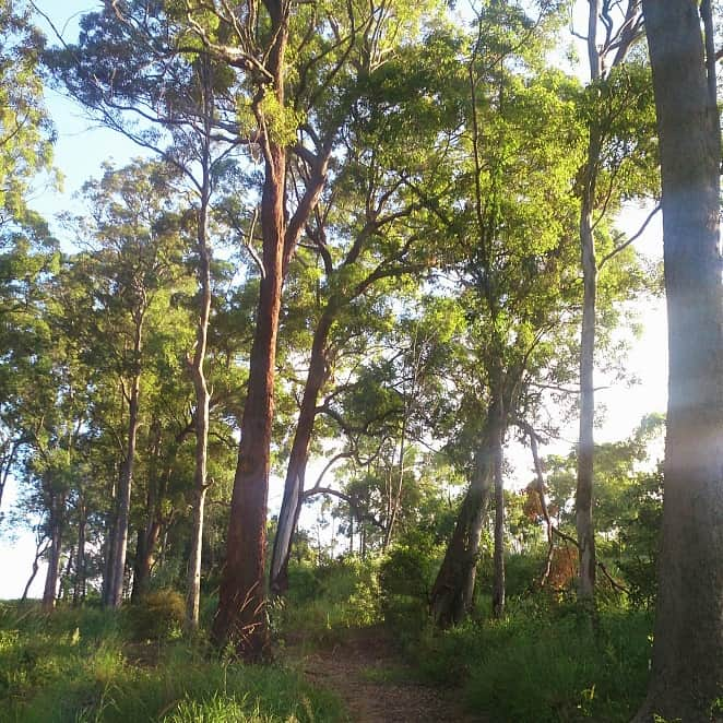 Open Space Management Plan – Mudgeeraba QLD