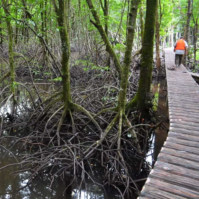 Brunei Mangrove Management and Conservation Study in Lubu Forest Area – Brunei Darussalam