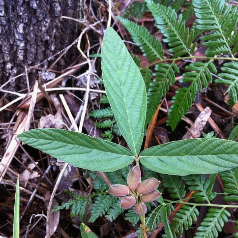 Ecological Assessment – Karana Downs QLD