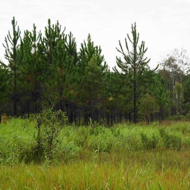 Yarrabilba Long-Term Environmental Management Project – South East QLD