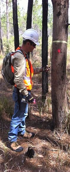 Vegetation surveys in Queensland (2)