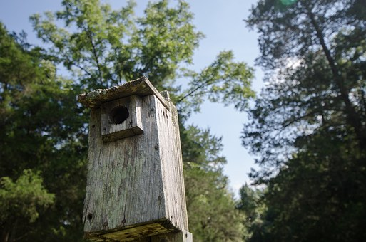 Nature's high rises – The importance of tree hollows and nest boxes