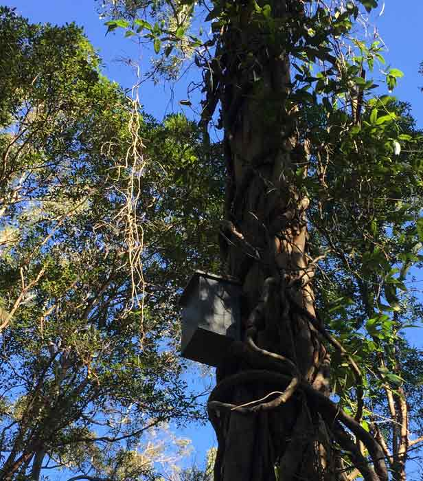 VIDEO: Homes among the gum trees – Nestbox installation