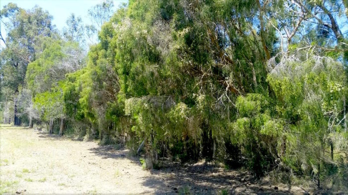 01 Dairy Creek Rd - Detailed Ecological Assessment 2