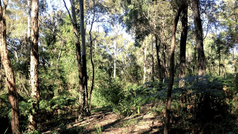 Natura-Pacific-Greens-Road