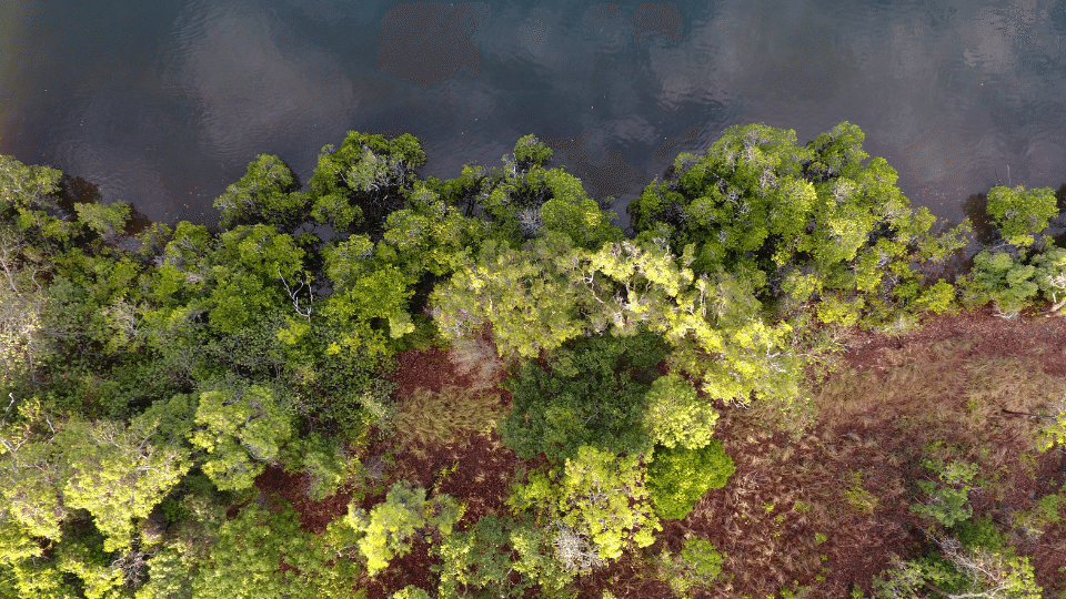 Natura-Pacific-Skardon-River