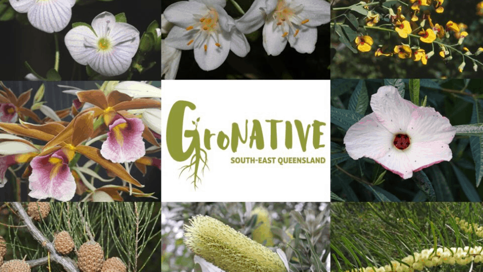 Botanical Bazaar & Gronative