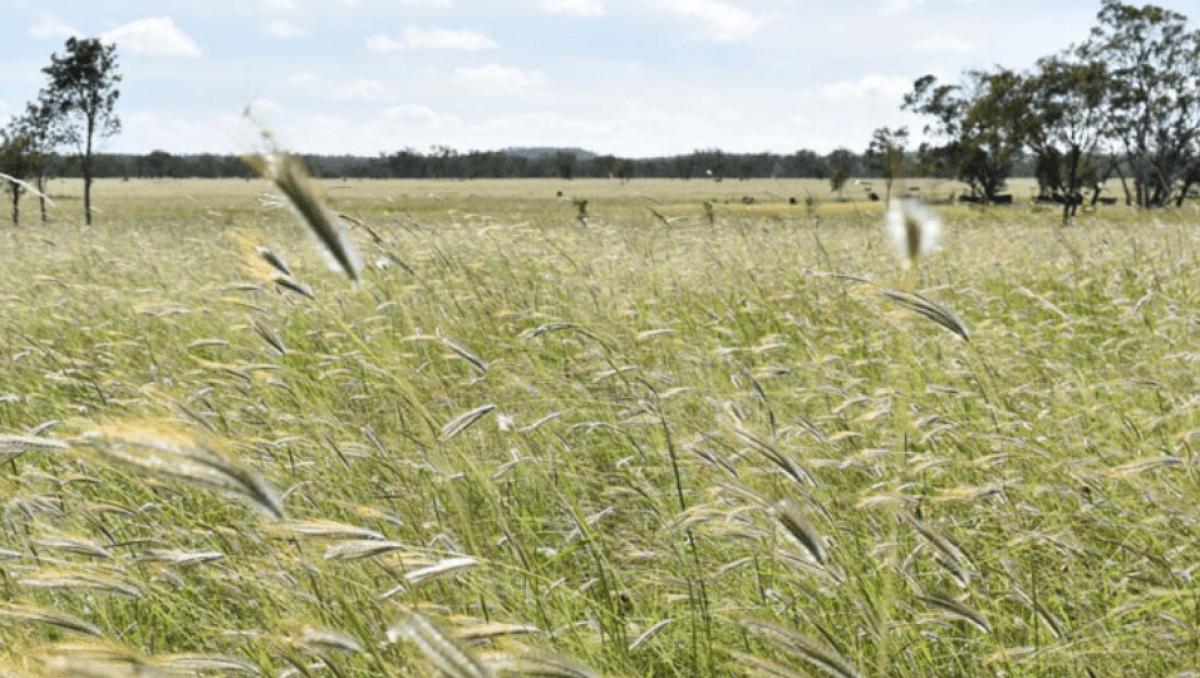 threatened species - grasslands